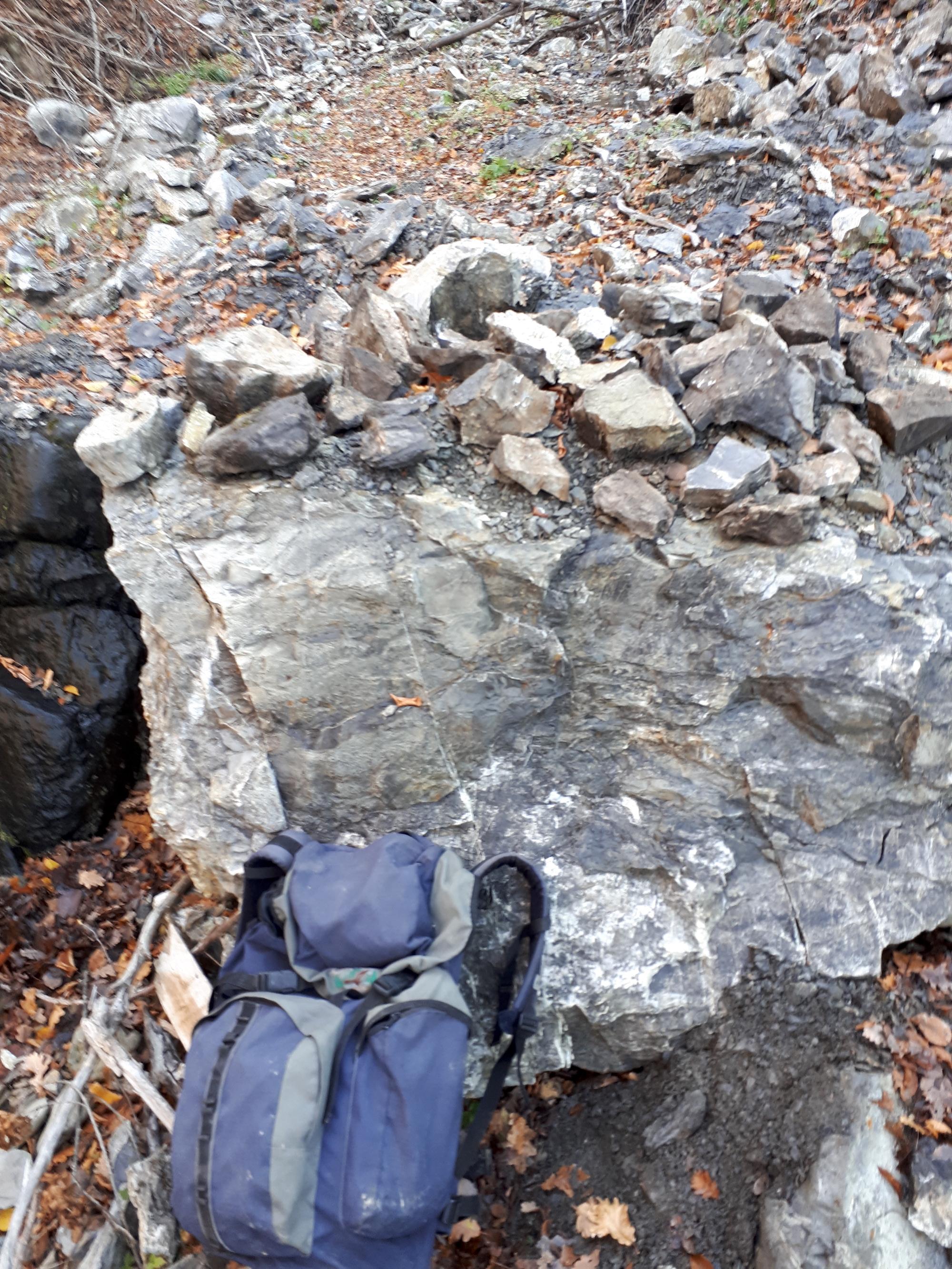 panoramica campioni ritrovati